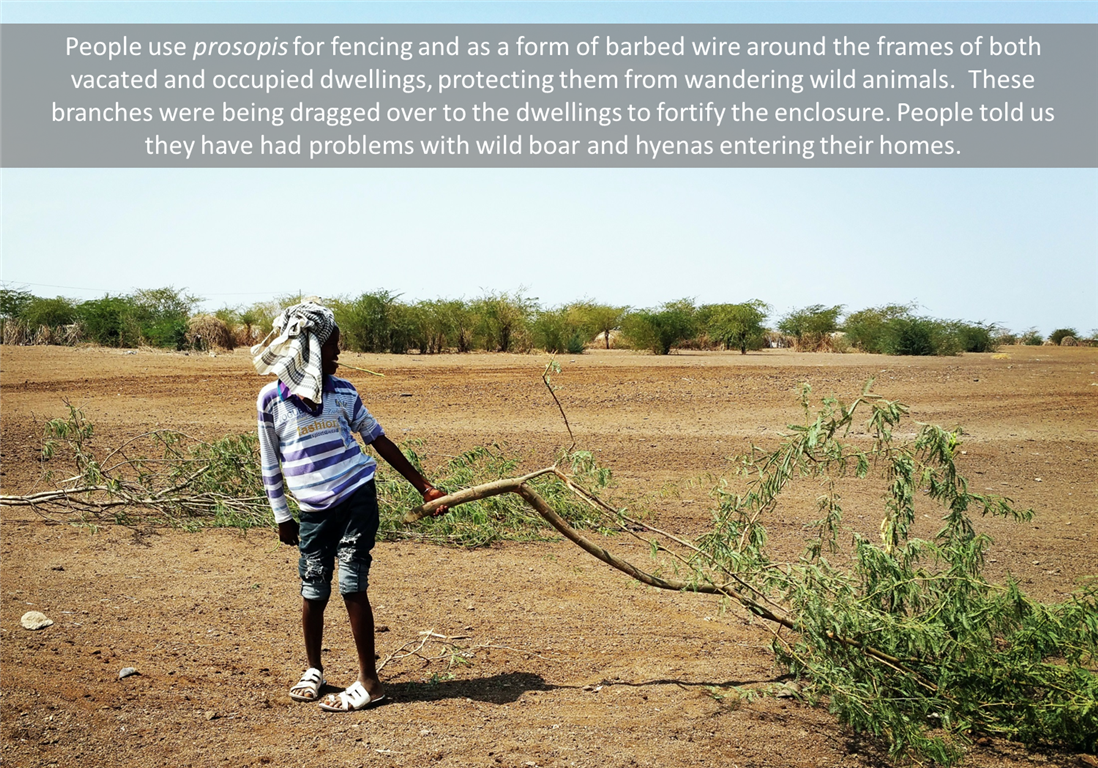 when drought hits hard a photo essay from adaptation  when drought hits hard a photo essay from