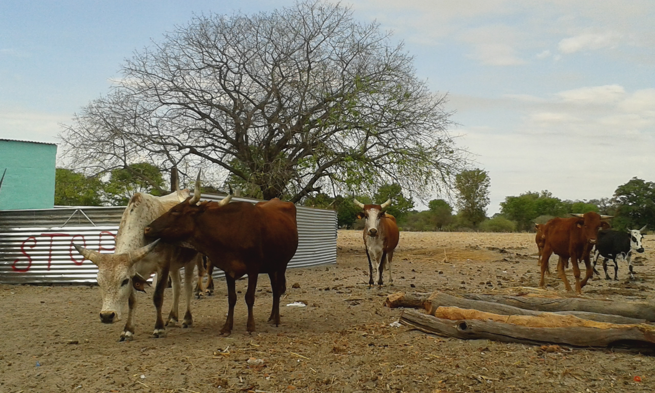 Livestock as wealth for rural Namibians | Adaptation at Scale in