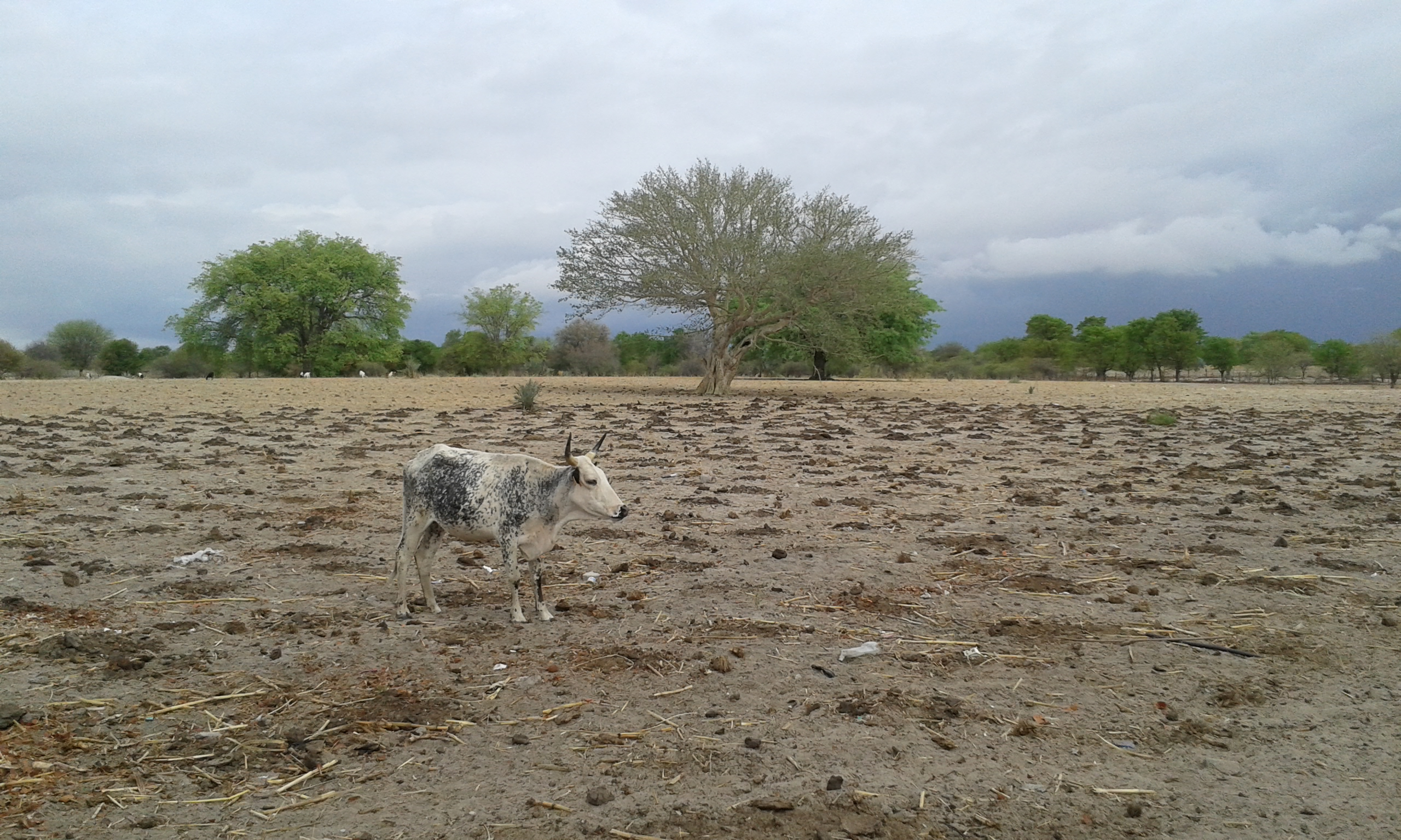 Climate radio show looks at the importance of drought
